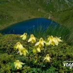 urdini ezera